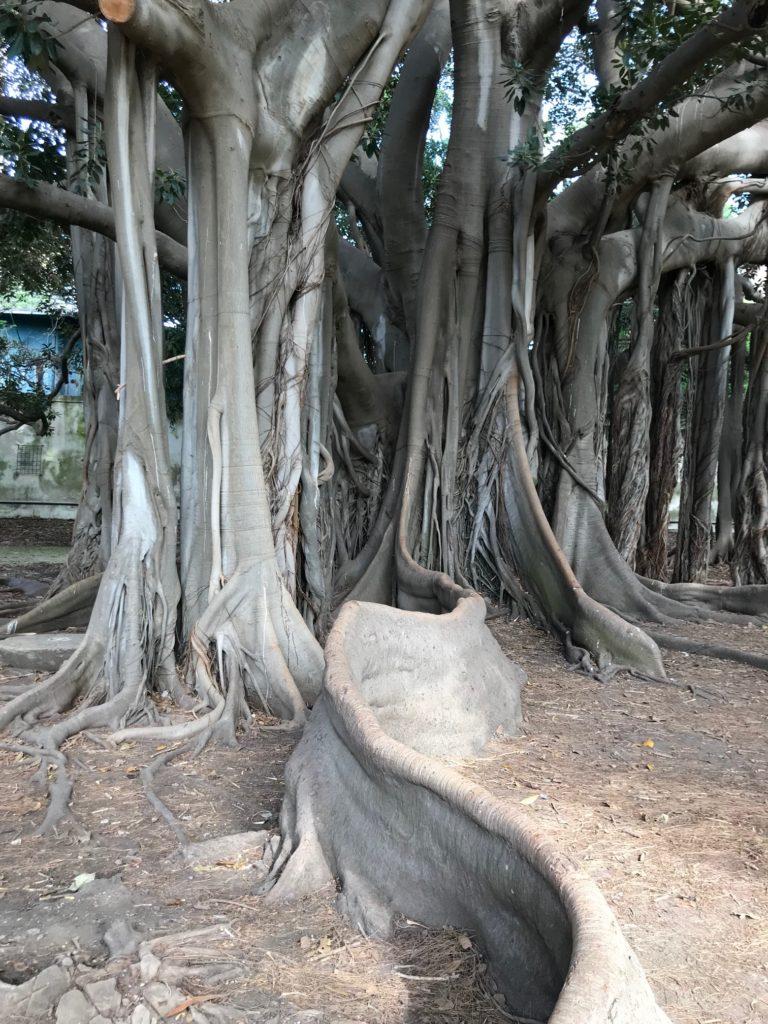 Botanic Garden, Palermo