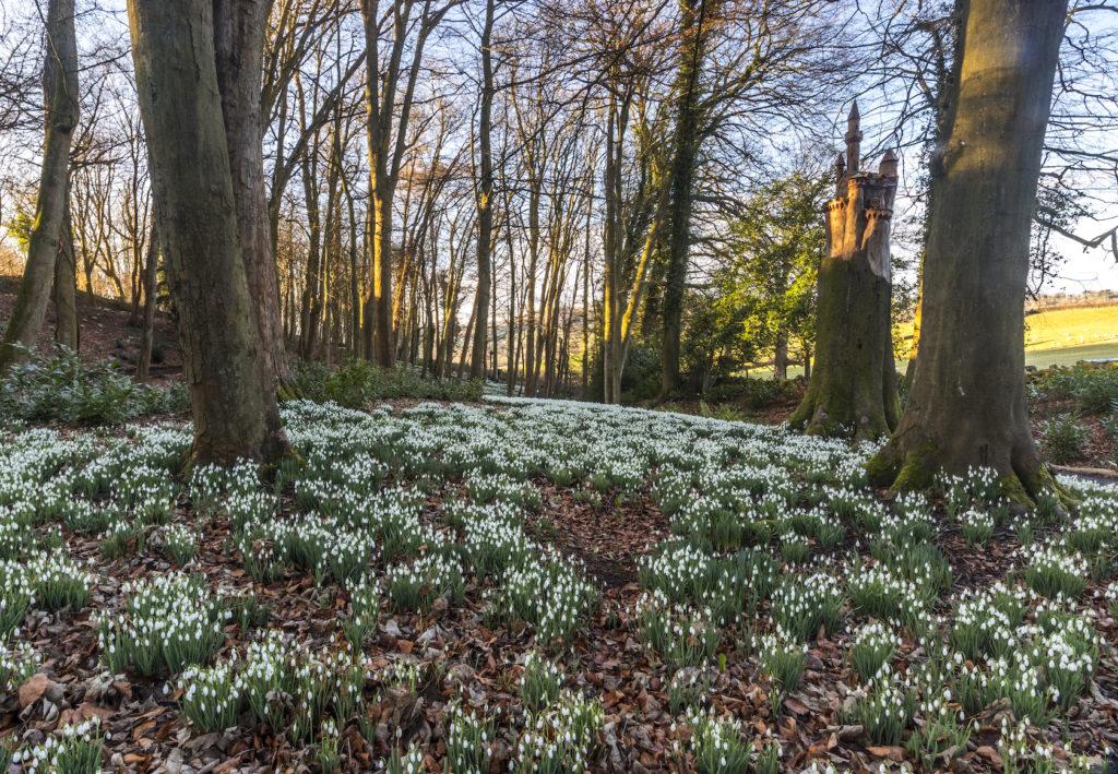 Snowdrops at Painswick Rococo Garden Photo by David Broadbent