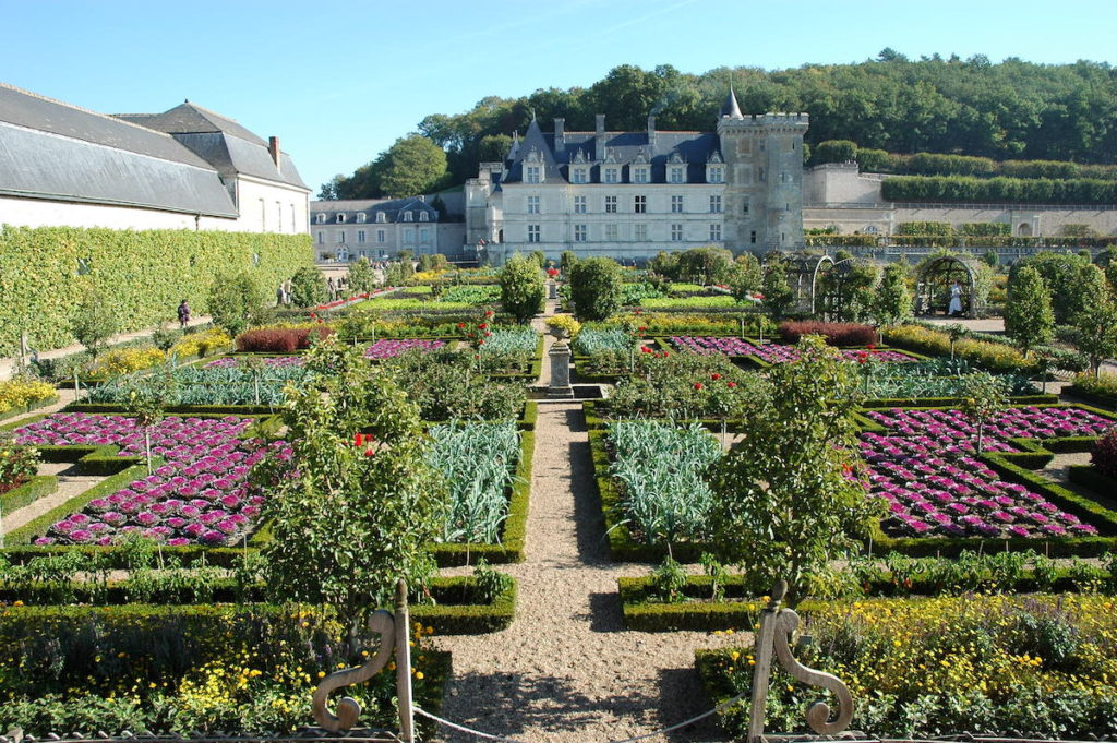 Photo of the kitchen garden with ornamental planting of cabbages at the jardins de Villandry