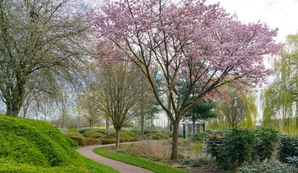 The pavilion at the East End of Campbell Park with a flowering cherry tree