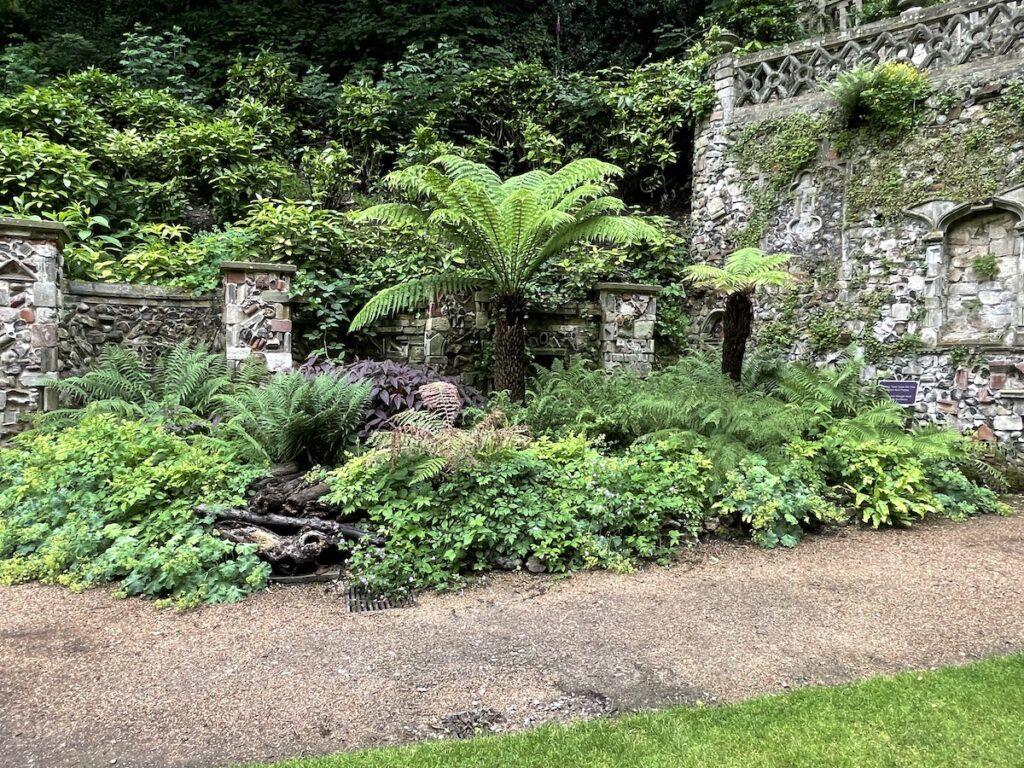 Tree ferns in the Plantation Garden