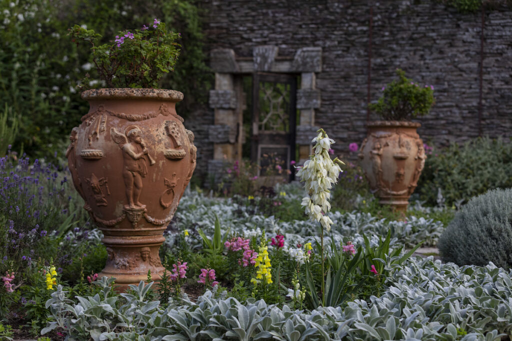 Two urns and silver-leaved planting